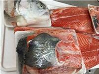 Xương cá hồi - salmon bones
