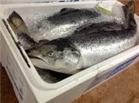 Cá hồi tươi nguyên con - Norwegian Salmon